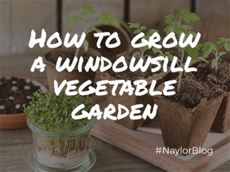Windowsill Vegetable Garden by Naylor Landscape Management