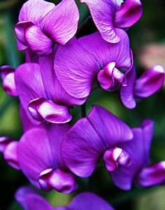 Dark Purple Orchid Photograph by Xt Leavitt