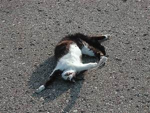 Dead Cats | Photos | Funny And Cute Animals