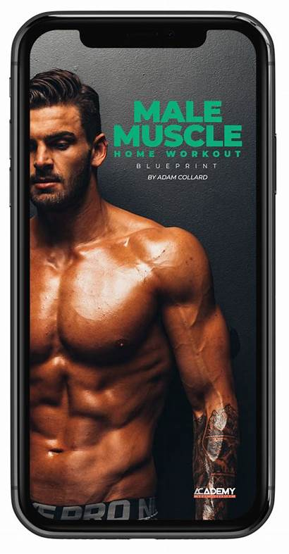 Workout Muscle Male Blueprint Guide Lean Learn
