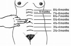 Diagram Showing The Finger Method For Measuring Fundal
