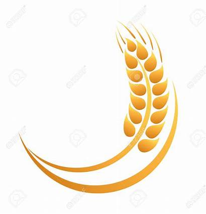 Clipart Wheat Icon Trigo Espigas Ears Clipartstation