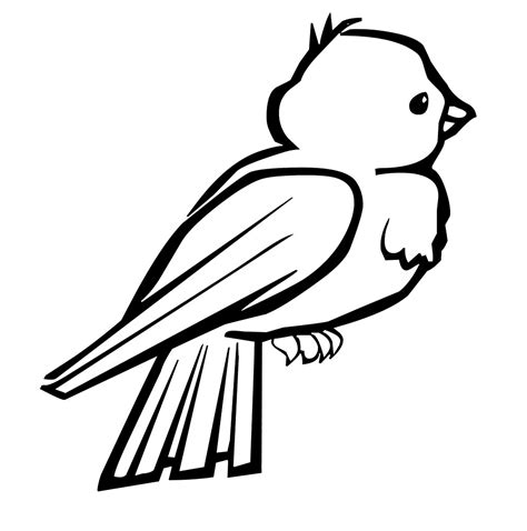 bird  coloring kids