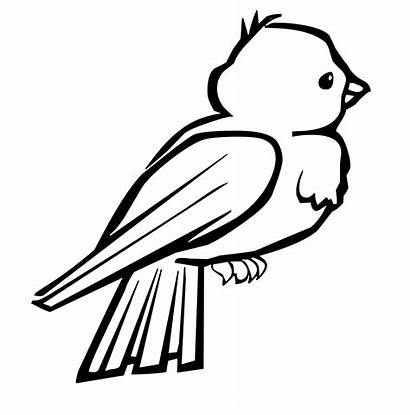 Coloring Birds Bird Pages Printable Sheets Colouring