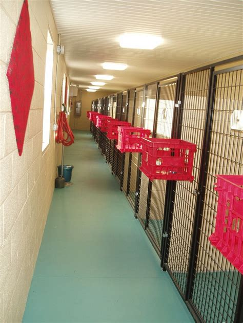 indoor kennel flooring ideas best 25 kennels ideas on hotels that take
