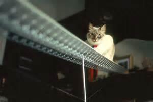cat bridge carl pisaturo technics photos