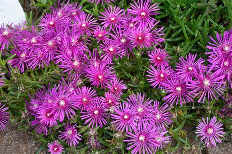 colorful perennials colorful perennials partial sun flowers savingourboys info