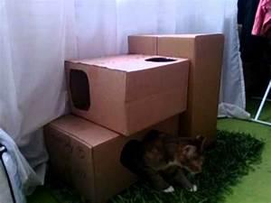 Katzenhaus Selber Bauen : luna cat und ihre kleine karton burg youtube ~ A.2002-acura-tl-radio.info Haus und Dekorationen