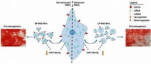 Microvesicles As Potential Biomarkers For The