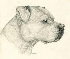 Pencil Pitbull by Tsebresos on DeviantArt