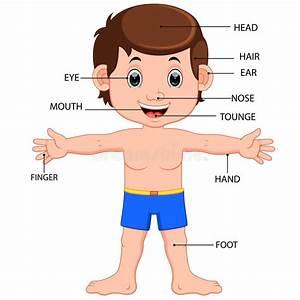 Boy Body Parts Diagram Poster Stock Vector