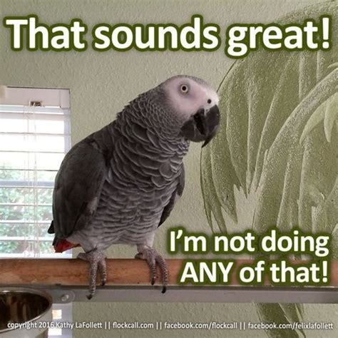Crazy Bird Meme - 75 best funny bird memes images on pinterest funny birds riddles and parrot