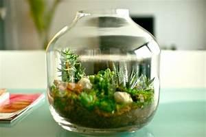 Bonsai Im Glas : designer idee originelles terrarium f r ihre bonsai b ume ~ Eleganceandgraceweddings.com Haus und Dekorationen