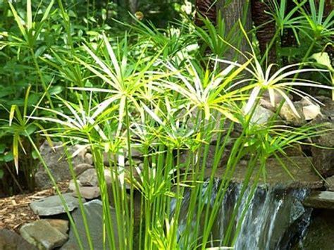 water garden plants water plants