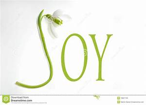 snowdrop and letters joy stock photos image 18621753 With joy greenery letters
