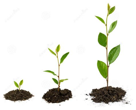 growing plants growing plant images reverse search