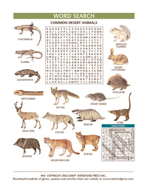 animal camouflage worksheets resultinfos