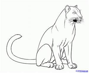 How to Draw Panthers, Black Panthers, Step by Step ...