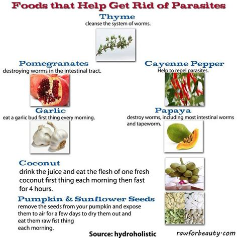what gets rid of worms foods that help get rid of parasites lyme disease info pinterest