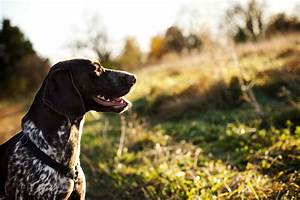 Hunting Dogs 101: Everything You Ever Wanted to Know ...