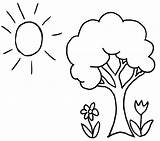 Tree Coloring Pages Trees Species Shrubbery Goodies Shrubs Exotic Database Native sketch template