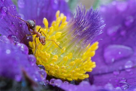 macro photography ideas photo sharing site