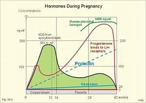 Hormones Partuition