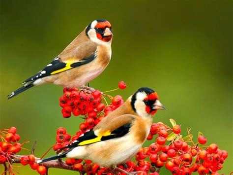 birds images birds images