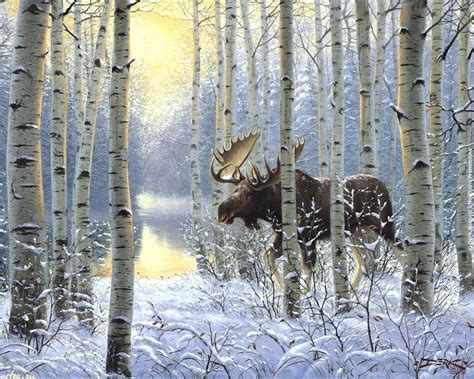animal cold moose  winter forest animals  hd