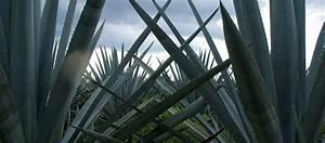 Plante Succulente Espèces Représentatives : plante monocarpique plante qui meurt apr s la floraison ~ Nature-et-papiers.com Idées de Décoration