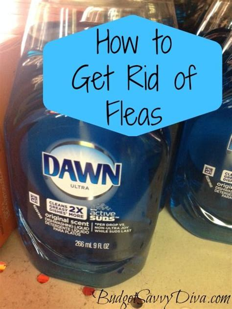 rid   pets fleas budget tips
