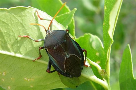 29 Common Garden Pests In Australia And How To Get Rid Of