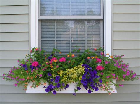 Flowering House Plants For Windows by 1000 Images About Window Box Ideas Flowers On