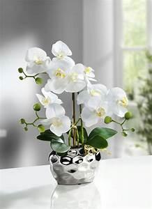 Orchideen Ohne Topf : topf orchidee preisvergleich die besten angebote online kaufen ~ Eleganceandgraceweddings.com Haus und Dekorationen
