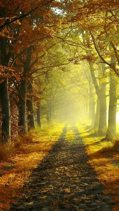 Nature Wallpapers Portrait Road Autumn 1080 Country