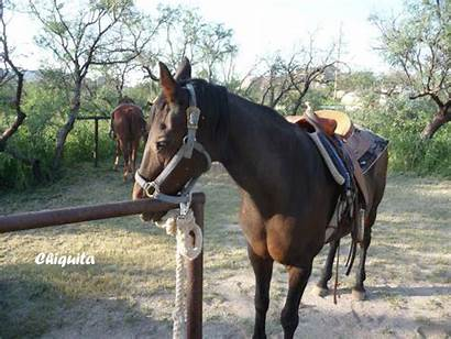 Ranch Riding Horse Trail Rides Triangle Rodeo