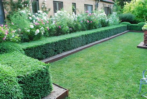 hedge ideas for landscaping check out edging between lawn and boxwoods gardening pinterest boxwood hedge lawn and