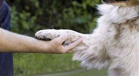 agila haustierversicherung der hundeblog fuer hundeliebhaber