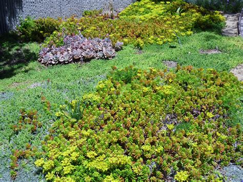 succulents ground cover ground covers gardengates gardening and landscape design