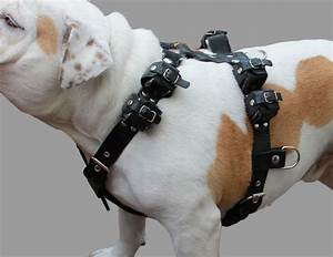6 Lbs Real Leather Weighted Pulling Dog Harness Exercise