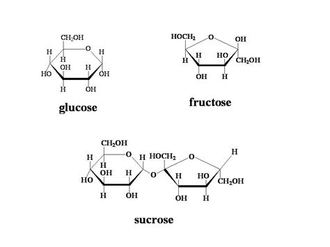 simple sugars fructose glucose and sucrose lab cat