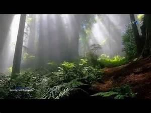 Sale E Pepe Köln : michel p p la montagne sacr e youtube lyriquelle monde tropical forest enchanted tropical ~ Watch28wear.com Haus und Dekorationen