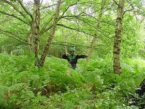 Foret De Sherwood : angleterre foret de sherwood robin des bois ~ Voncanada.com Idées de Décoration