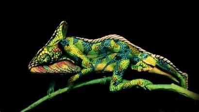 Paint Painting Chameleon Johannes Painter Trina Isn