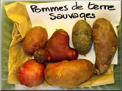 origan en cuisine pomme de terre pommes de terre sauvages