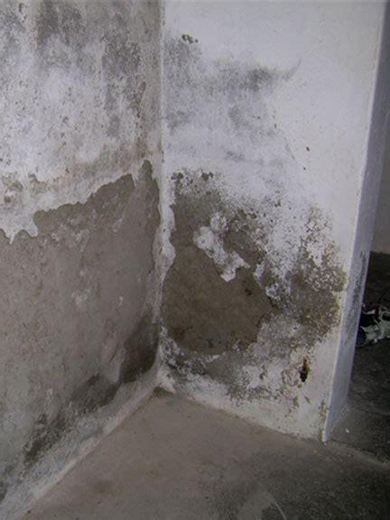 Schimmel An Den Wänden by Schimmelbildung Im Keller