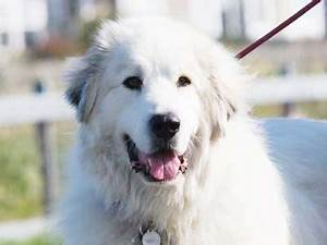 White Dog Breeds List