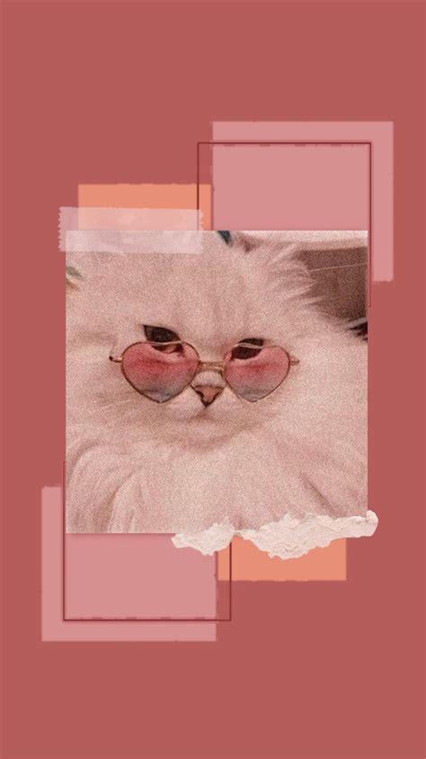 cat aesthetic wallpaper iphone cat aesthetic wallpaper
