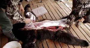 Learn How To Skin A Black Bear With Steven Rinella And Paul Neess  Video