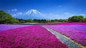 Spring Field With Flowers Mountain Fuji Blue Japan Landscape Wallpaper Hd   Wallpapers13 Com